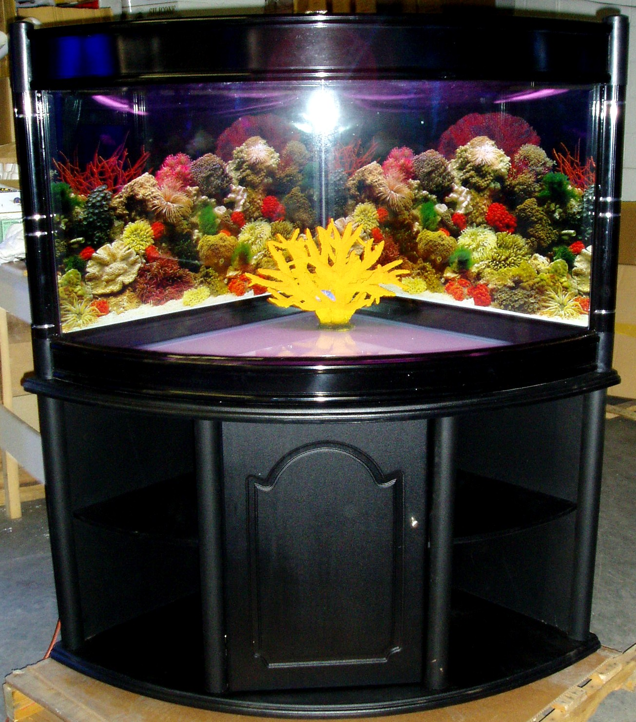 92 gallon corner fish tank related keywords 92 gallon for Corner fish tank for sale