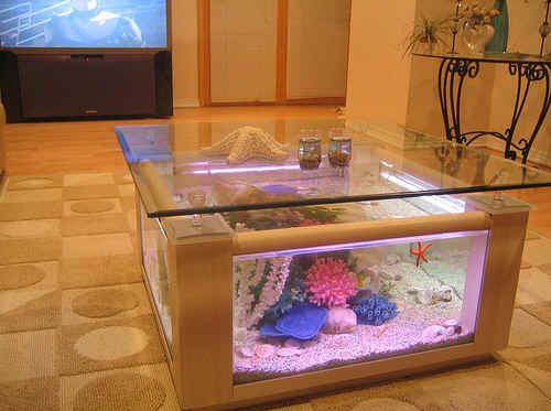 Coffee table aquariums new york for Square fish tank