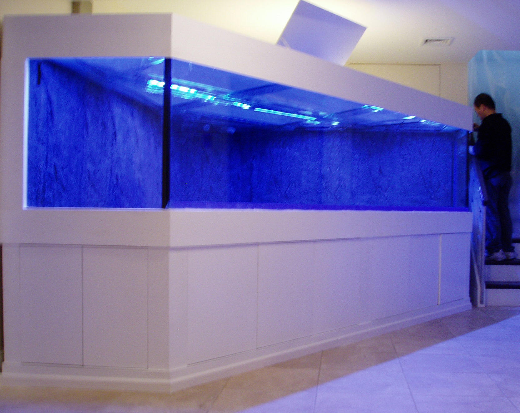 Fish tank sharks - 2 000 Gal Shark Tank With 3d Rock Background Custom Sump Filter Tank Was Built Using High Impact Resistant Glass On Site Stand Was Made Of Several