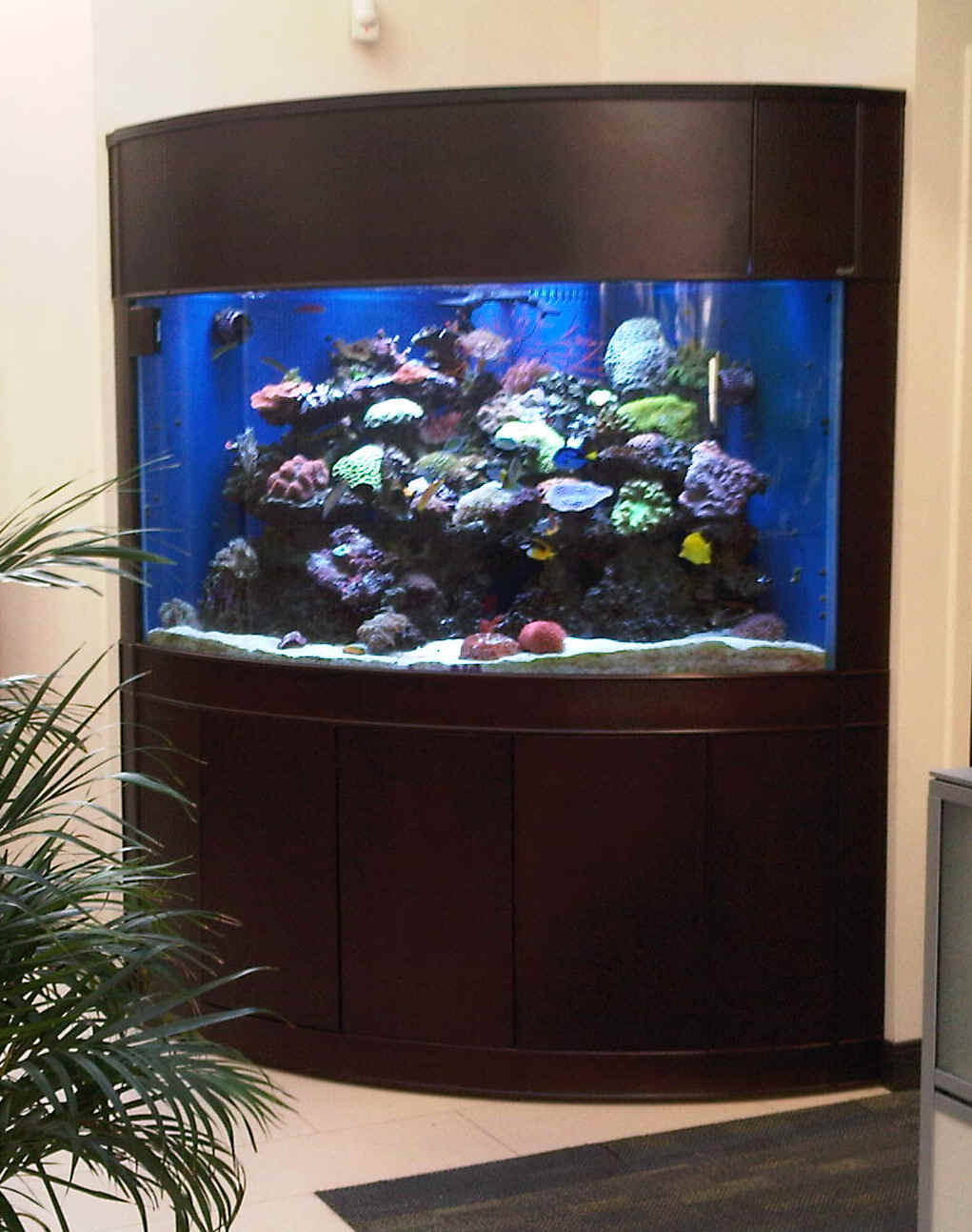 More pictures of MV corner aquariums