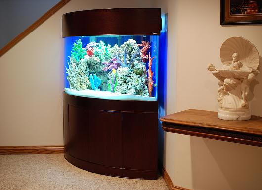 Ov corner for 55 gallon corner fish tank