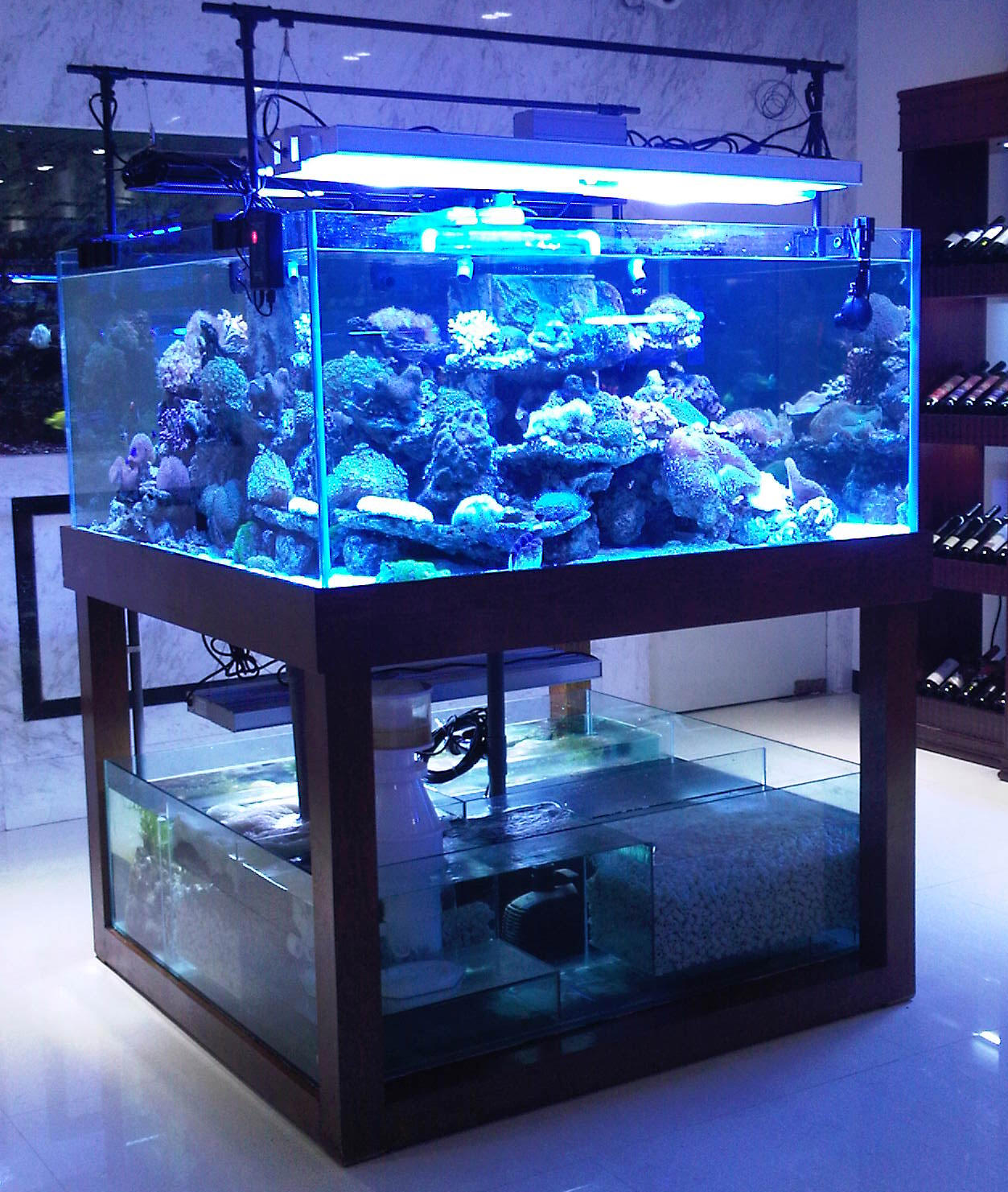 4 ultra for Cube saltwater fish tank